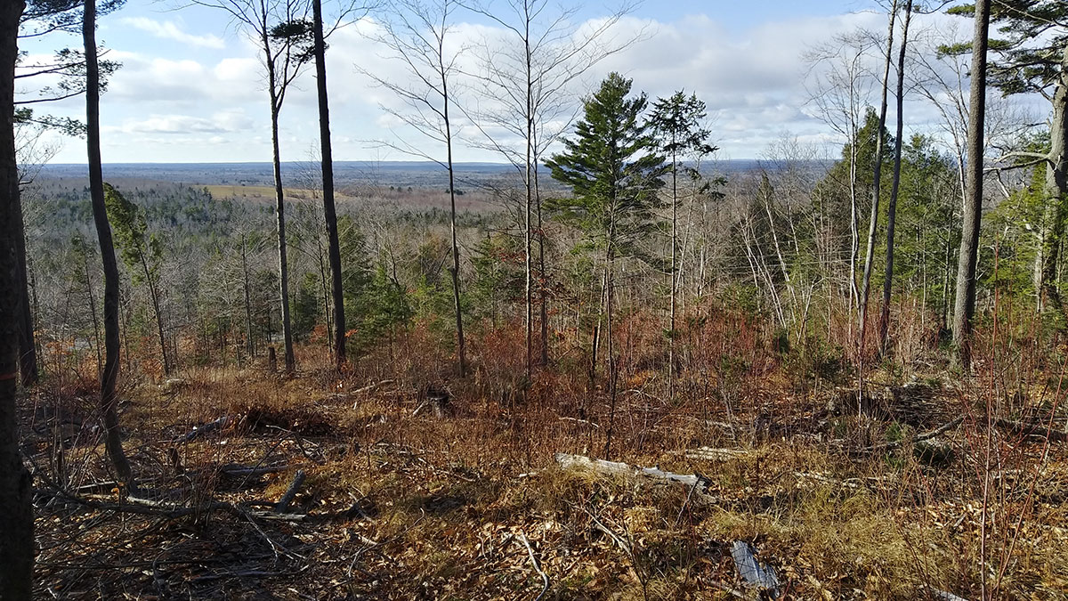 1.5 Acres – Lincoln, ME – Penobscot County