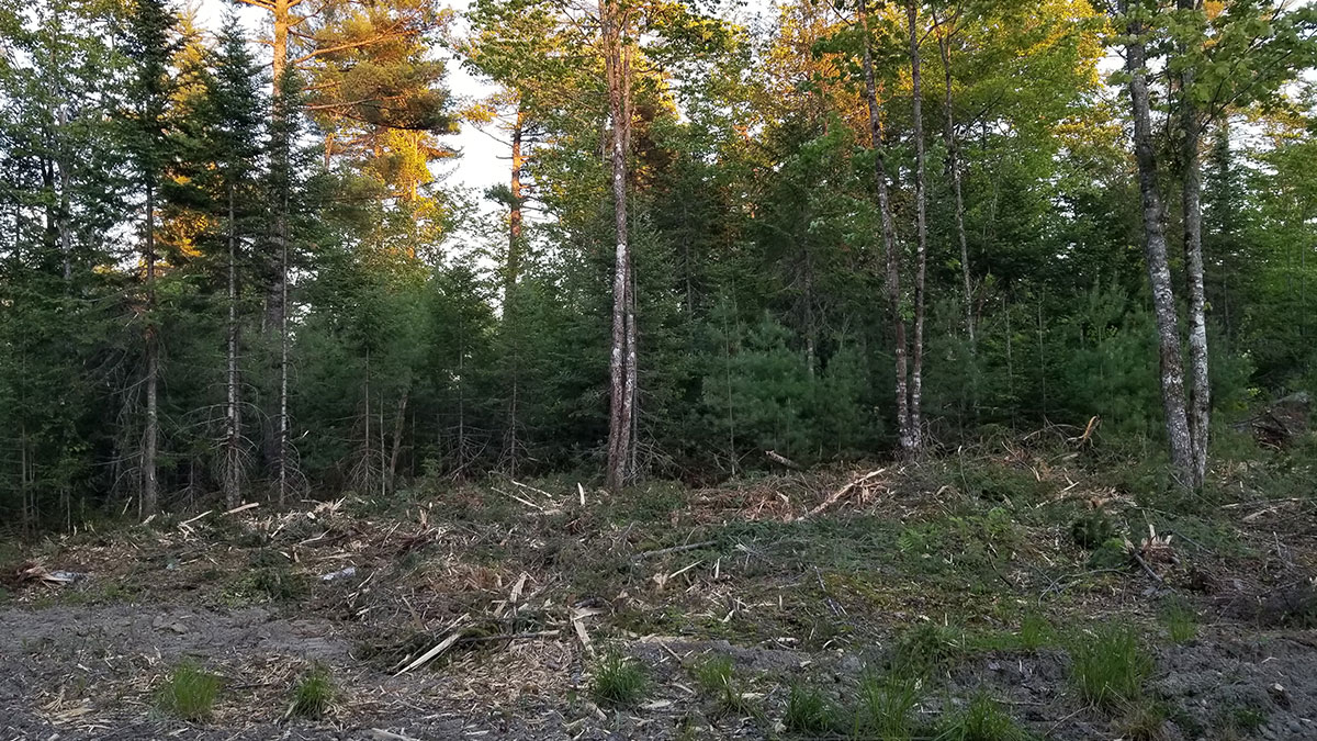 3.93 Acres – Lincoln, ME – Penobscot County
