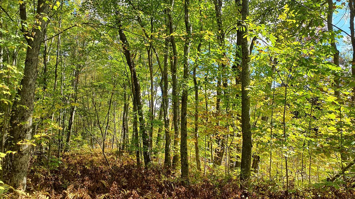 20 Acres – Medford, ME – Penobscot County